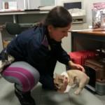 Trasportavano illegalmente cuccioli di cane: condannati dopo tre anni padre e figlio