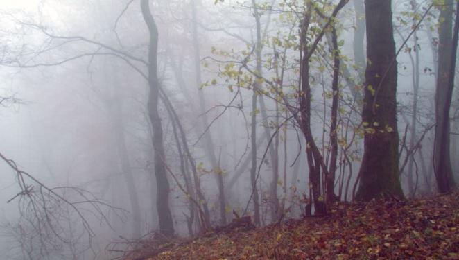 Meteo: foschie e qualche nebbia, specie sulla bassa pianura e nelle ore notturne