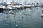 Delfini in Sacchetta (foto)