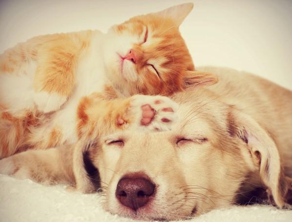 Favorito L'amore per cani e gatti, alla Ubik la presentazione dei romanzi  PL46