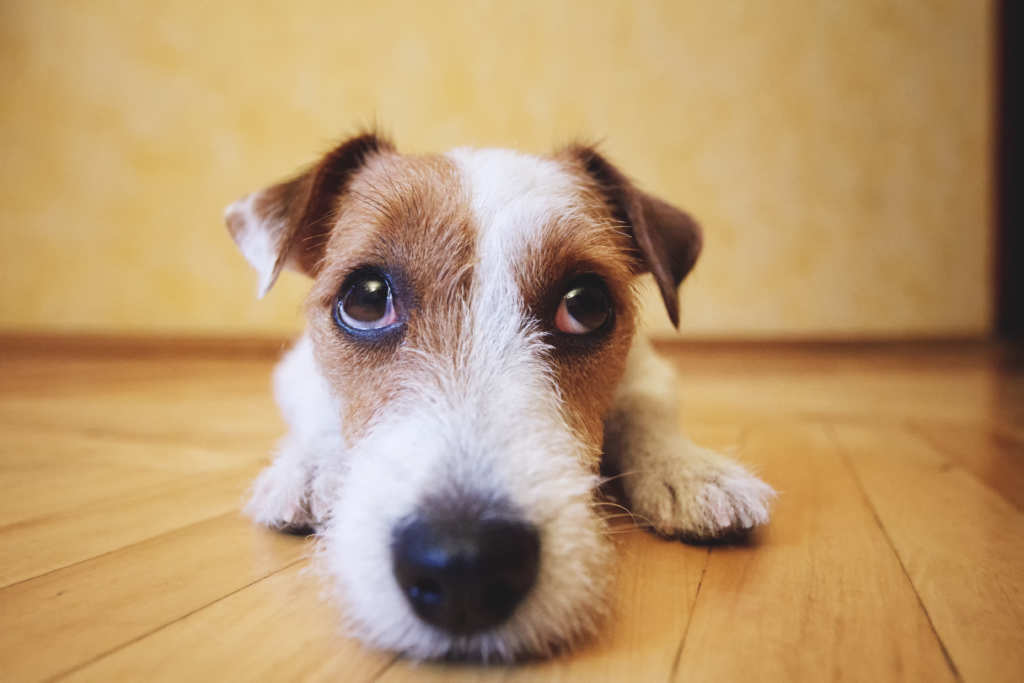 Risultati immagini per cane in casa