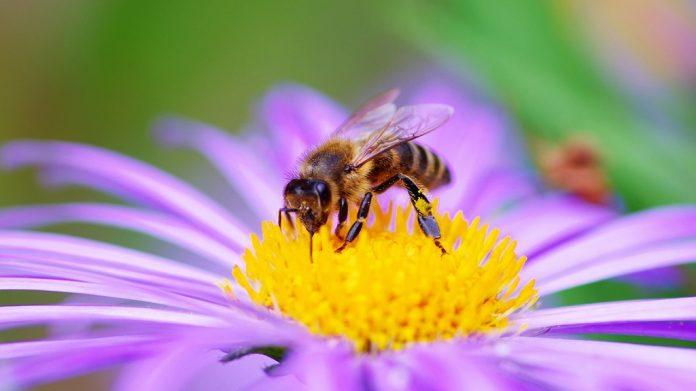 'Piantiamo più fiori!': il 20 maggio si celebra la giornata mondiale delle api - www.triesteallnews.it